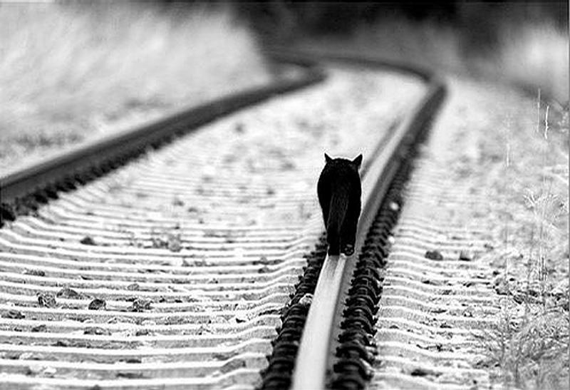 Γάτα σε ράγες τρένου. Περπατώντας μόνος σου.