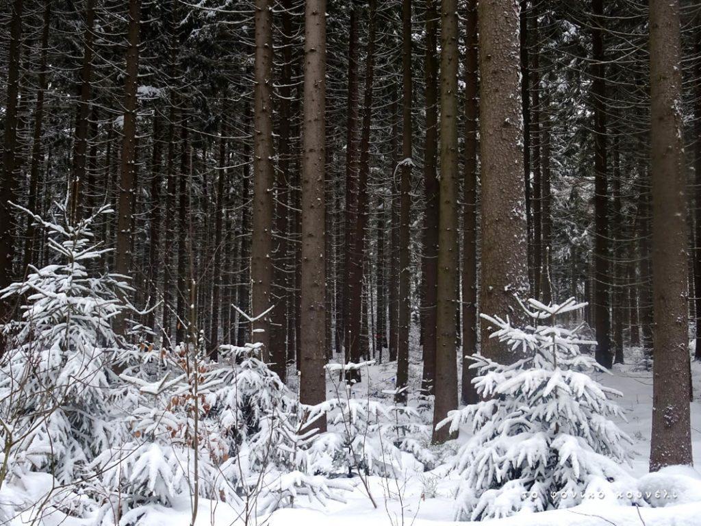 Δέντρα και χιόνια στο δάσος της Βαυαρίας / Snow trees in Germany