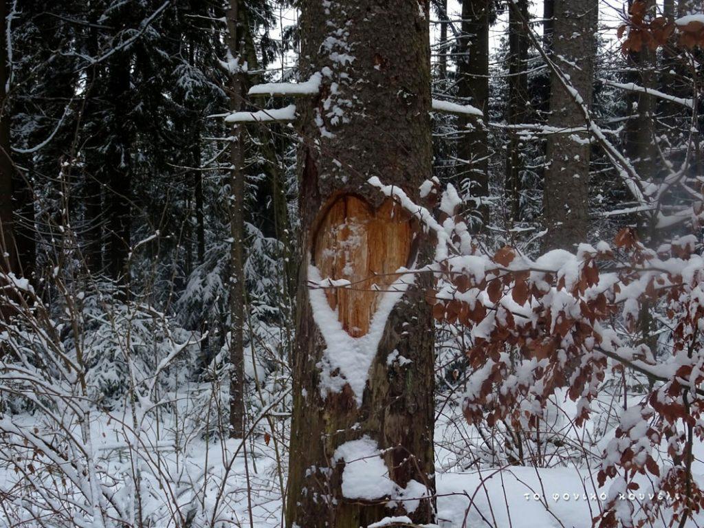 Καρδιά σε κορμό δέντρου στο χιονισμένο δάσος / Heart in a tree branch