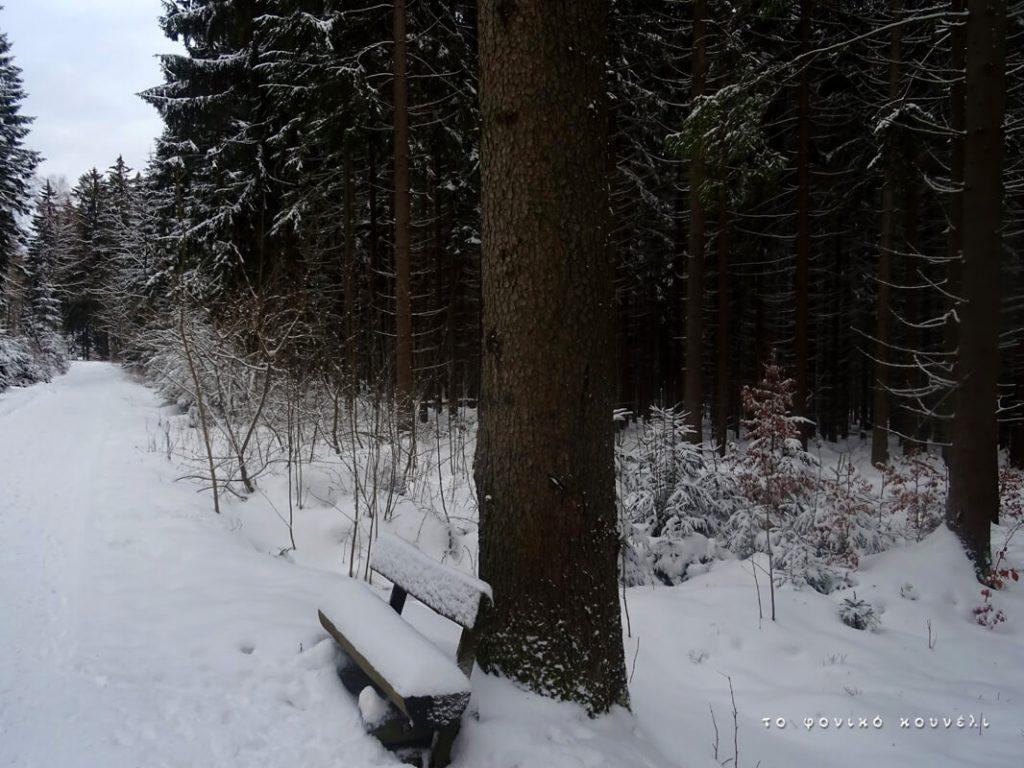 Δάσος στο χιόνι / Winter forest scene, Bavaria, Germany