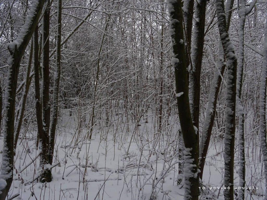 Χιονισμένο άλσος με δέντρα, στη διάρκεια του χειμώνα / Snow forest in winter