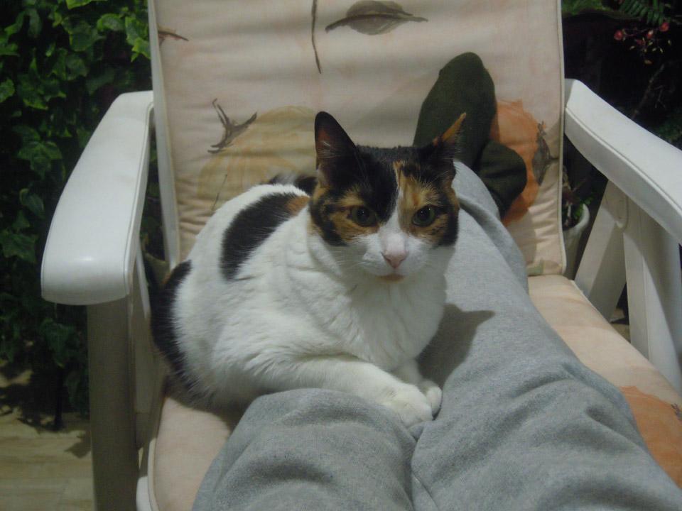 Η Φατσούλα, μια υπέροχη γάτα