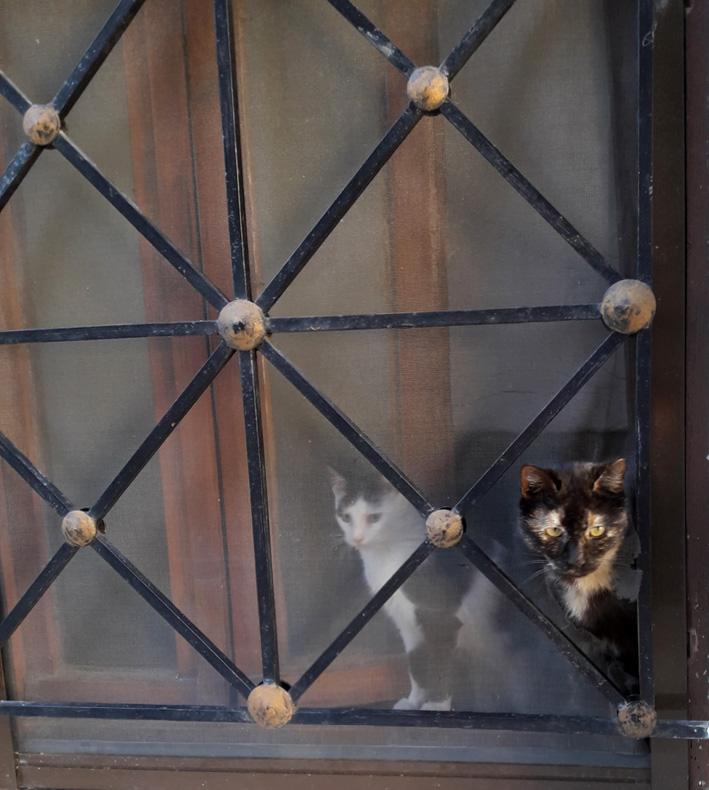 Η Βούρτσα και η Μπουκίτσα, ενώ ετοιμάζονται να περάσουν τη μαγική πύλη!