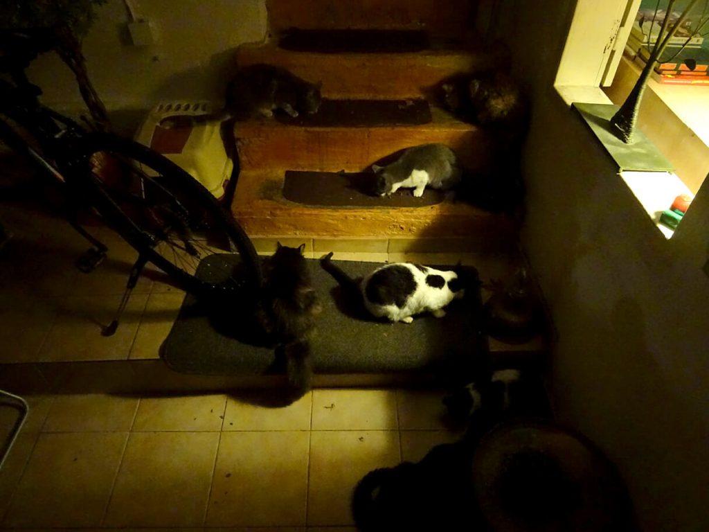 Ώρα για φαί. Μια αφιέρωση στις γάτες που γυρίζουν στο λαγούμι του Κούνελου