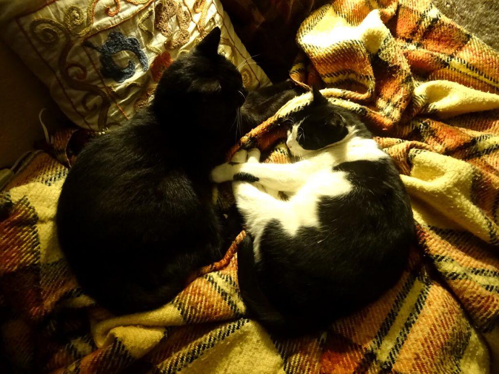 Ο Πιέρ και το Ρινάκι, δύο γατόνια που κοιμούνται αραχτά