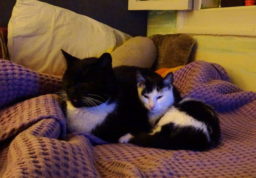 Μια αφιέρωση στις φίλες γάτες που γυρίζουν στο λαγούμι του Κούνελου... Ο Πιέρ και η Μπουκίτσα