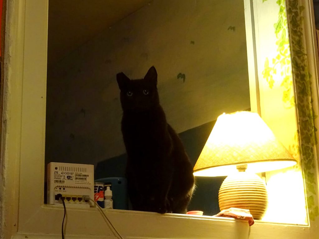 Η Μπιλίτσα, μια όμορφη μαύρη γάτα που ποζάρει για τον φακό