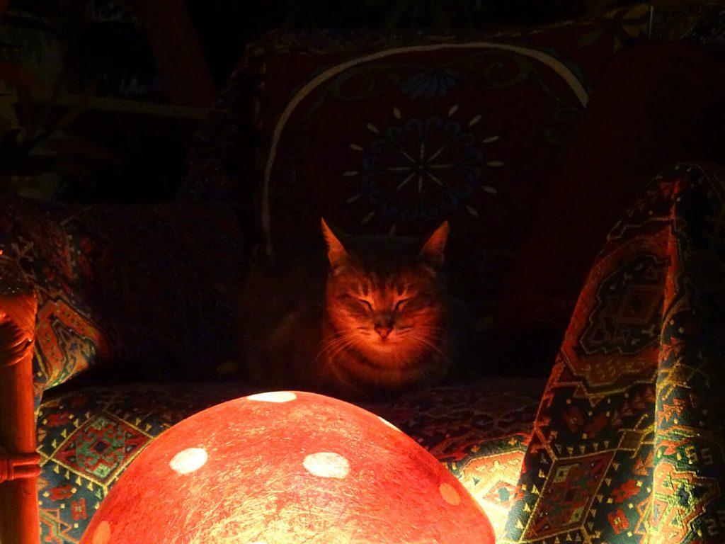 Η Γκριζούλα υπό το φως του μανιταριού....