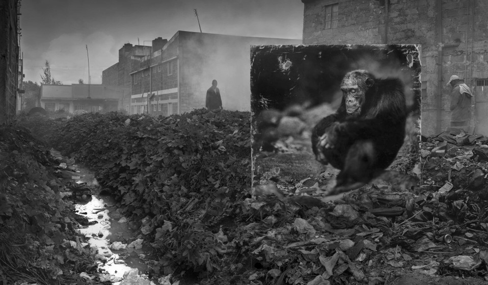 ALLEYWAY WITH CHIMPANZEE, photography by Nick Brandt